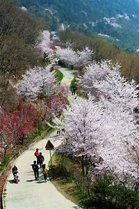 98 best South Korea Scenery images on Pinterest