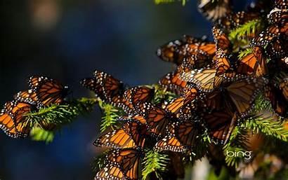 Bing Daily Backgrounds Desktop Wallpapers 1080 Monarch