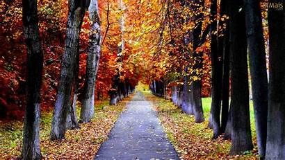 Autumn Caminho Outono Fond Gratuit Papel Lane
