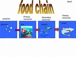 What Are Dolphins Food Chain Pictures to Pin on Pinterest ...