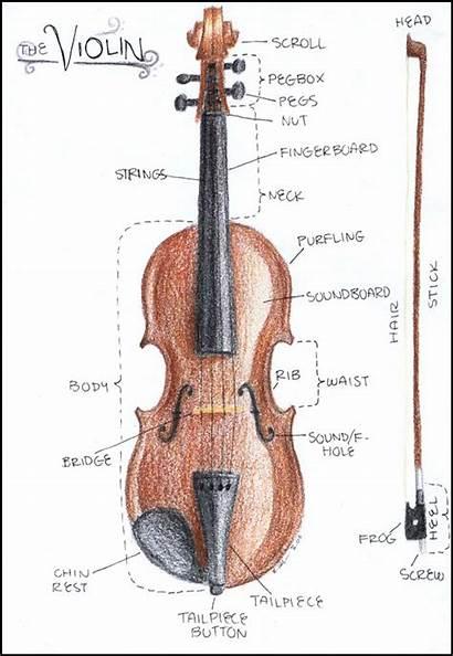 Violin Parts Diagram Drawing Instruments Instrument Bow