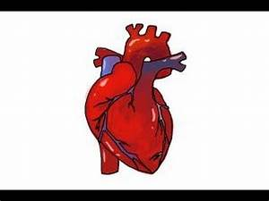 How to draw a human heart - YouTube