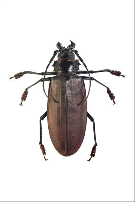 Beetle Insect Facts   Coleoptera   AZ Animals