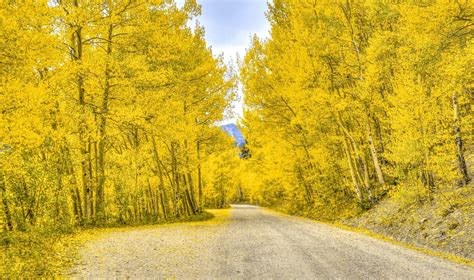 best fall colors in breckenridge autumn in colorado