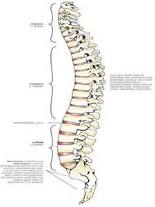 Pictures of a Spine or Back Bone