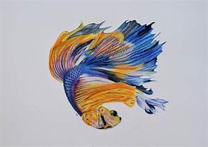Betta Fish 3 Drawing by Biophilic Art
