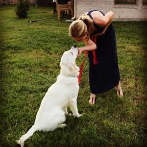dog training dallas forth worth dog trainer heart of With dog training dallas