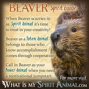 Graceful wild animal best blog: What do wild animal dreams ...