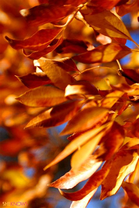 Fall Iphone Wallpaper Leaves by Fall Leaves Wallpaper Iphone Wallpapersafari