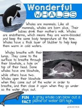 whales nonfiction reading   grade stories tpt