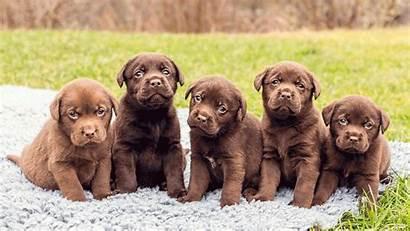 Puppy Wallpapers 1080p Desktop Dog Backgrounds Pet
