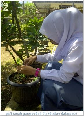 budidaya tanaman hias hydrangea bunga seribu amalia