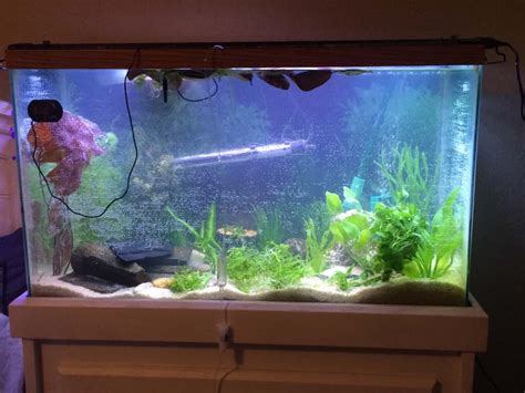 cheap fishes for aquarium 28 images aquarium for sale johor used cheap fish tank 4ft 2ft new