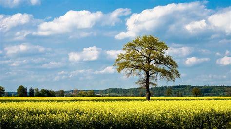 baum mit blüten die 71 besten baum hintergrundbilder