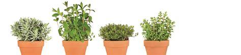 plantation de fines herbes en contenant les sols isabelle