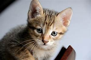 Hair Loss In Cats  Causes  U0026 Treatment