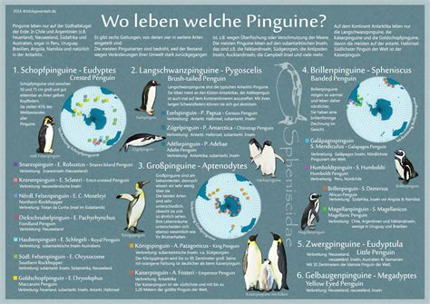 wo leben pinguine karte pinguinarten lebensraum
