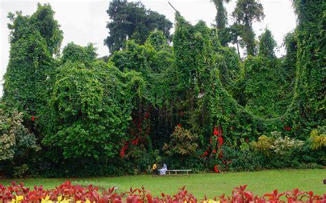 Botanischer Garten Sri Lanka by The Road To Kandy Peradeniya Royal Botanical Gardens