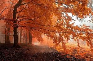 Fall, Mist, Path, Forest, Leaves, Trees, Orange, Nature, Landscape, Wallpapers, Hd, Desktop, And