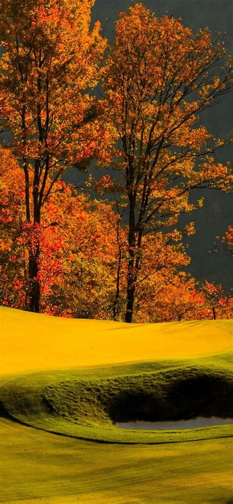 Autumn Wallpapers For Iphone Xr by Wallpaper Forest Trees Grass Lawn Golf Autumn