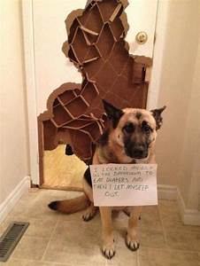 22, all, new, and, hilarious, dog, shaming, photos