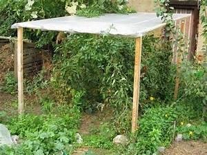 Tomaten Selber Anbauen : tomaten l ngere ernte durch regenschutz garten pinterest ernte tomaten ~ Orissabook.com Haus und Dekorationen