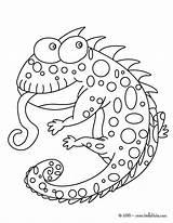 Coloring Chameleon Jackson Cameleon 87kb sketch template