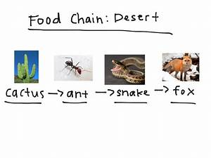 Food chain desert | Science, Biology | ShowMe