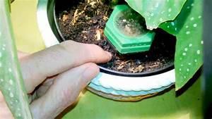 Vers De Terre Acheter : comment lever des vers de terre dans un pot de fleurs youtube ~ Farleysfitness.com Idées de Décoration