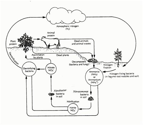 Photosynthesis diagram unlabeled ccuart Choice Image