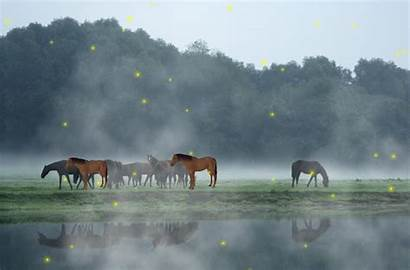 Animated Animal Wildlife Bing Screensavers Screensaver Wallpapers