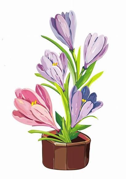 Crocus Pot Clipart Spring Plant Flower Flowers