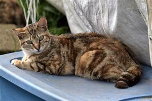 Little Brown tabby has a Half-tail | The Feral Life Cat Blog
