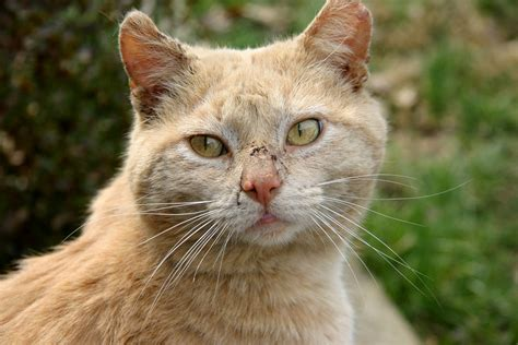 Was Darf Eine Nierenkranke Katze Nicht Fressen