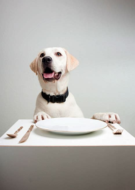 table food for dogs top 10 foods dogs can eat best large breed puppy food guide