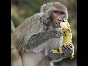 The Correct Way To Peel a Banana!!! - YouTube