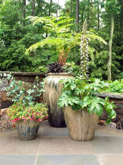 patio plant plants for your patio hgtv