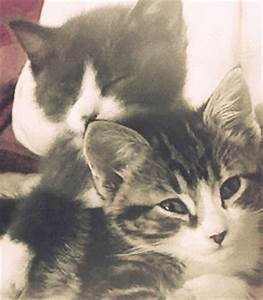 Cat Love GIF - Find & Share on GIPHY