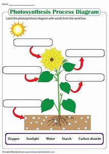 Label The Photosynthesis Diagram