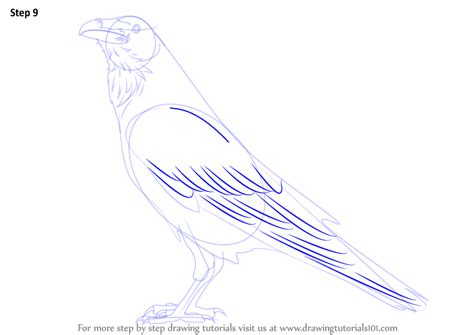 learn   draw  raven birds step  step drawing