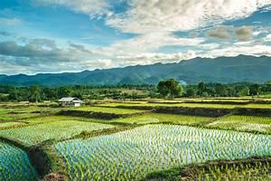 Rice field in Thailand by Jakrapong Sombatwattanangkool ...