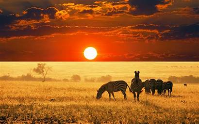 Landscape Animals Africa Sunset Zebras Desktop Wallpapers