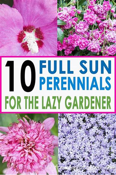 Sun Perennials Plants Low Flowers Maintenance Garden