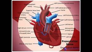Heart Blood Circulation Powerpoint Template