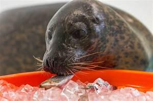National Aquarium | Animal Rescue Update: Phil's Continued ...