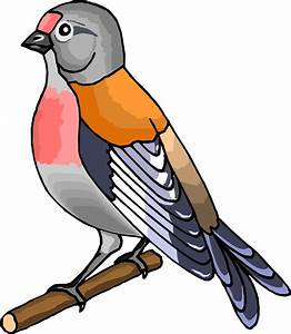 Berd Cartoon Images - ClipArt Best