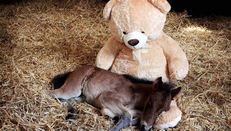 Schöne Beruhigende Bilder by Dieses Fohlen Freut Sich Tierisch 252 Ber Seinen Teddyb 228 Ren