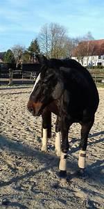 Pferde Kaufen Bremen : alt oldenburger kleinanzeigen pferde kaufen verkaufen bei deinetierwelt ~ Orissabook.com Haus und Dekorationen