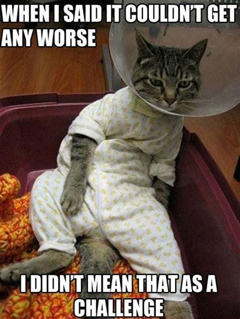 Weird Cat Meme - funny cats