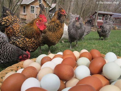 The Chicken Chick® Hurricane Preparedness For Backyard